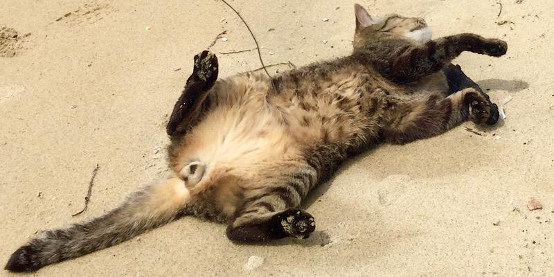 無防備な猫