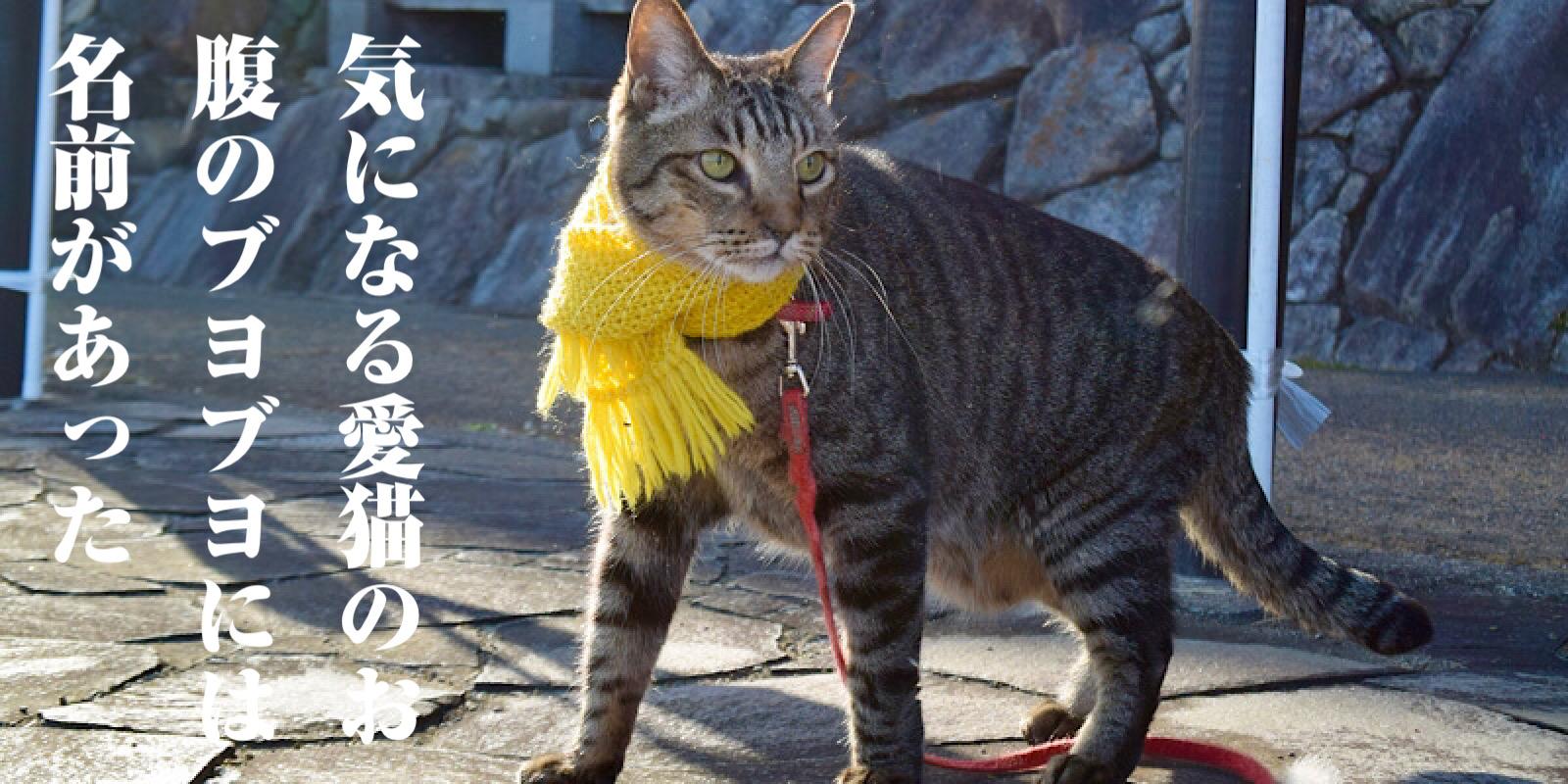 猫のお腹のタルタルはルーズスキン
