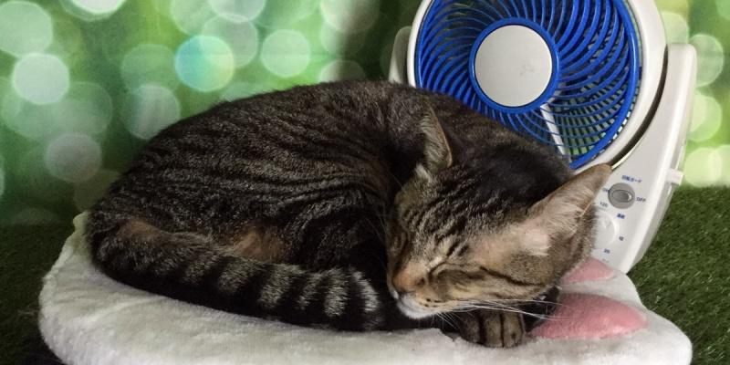 サーキュレーターと眠る猫