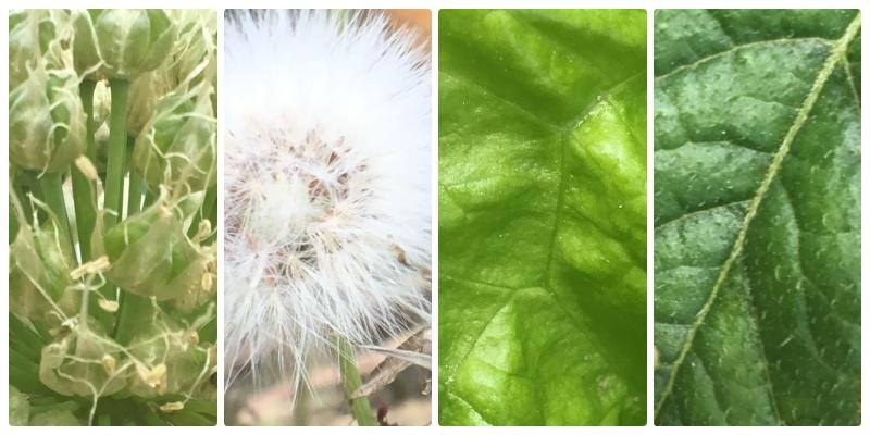 ダイソーのマクロレンズで撮影した植物