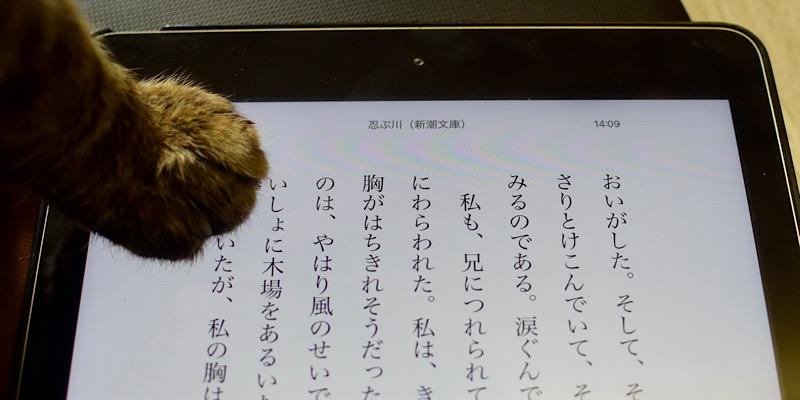 Kindleの邪魔をする猫