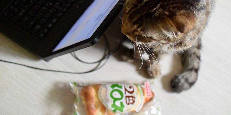 ヤマザキ2色メロネと猫