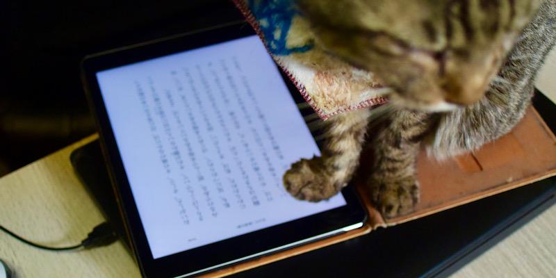 iPadに前足を乗せる猫