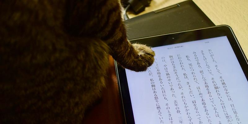 読書の邪魔に入る猫