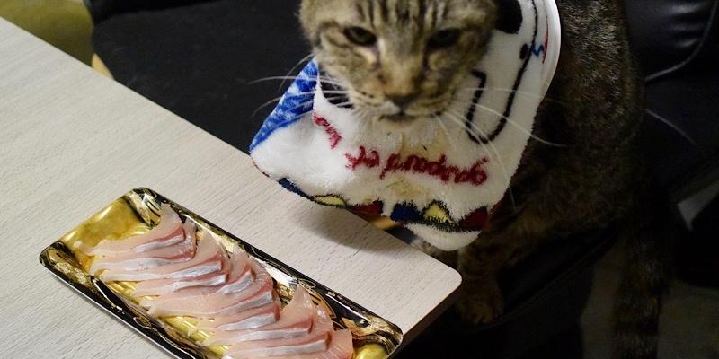 豊後くろしお鰤(刺身)食わせろと命令する猫