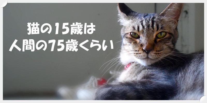 猫の15歳は人間の75歳くらい